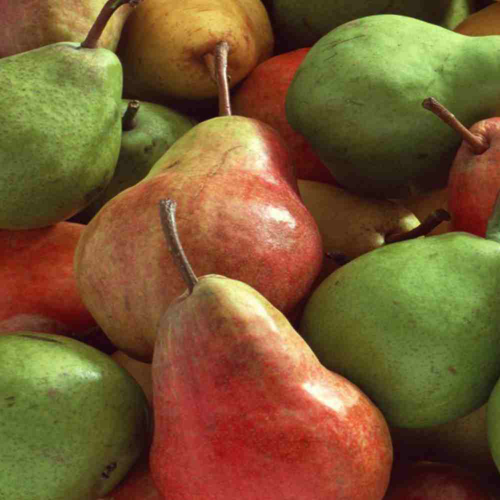pears-variety-ripe-tasty-fruit