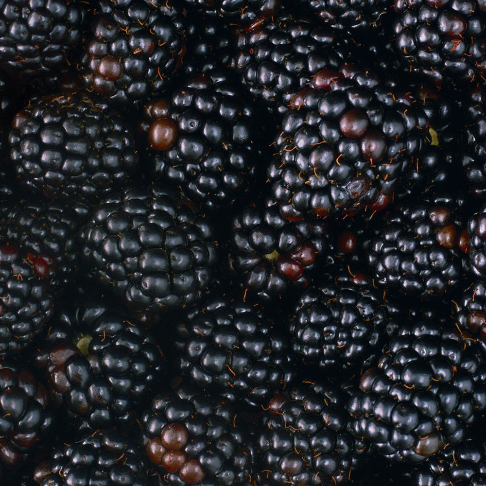 blackberries-fruit-food